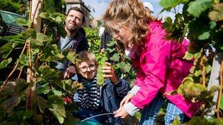 La 9e Fête de la Vigne à Nyon en images
