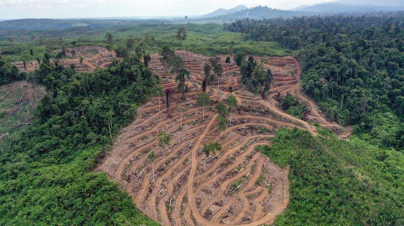 En Indonésie, le bilan carbone et la perte de biodiversité de la déforestation causés par la culture de l'huile palme posent de gros problèmes.
