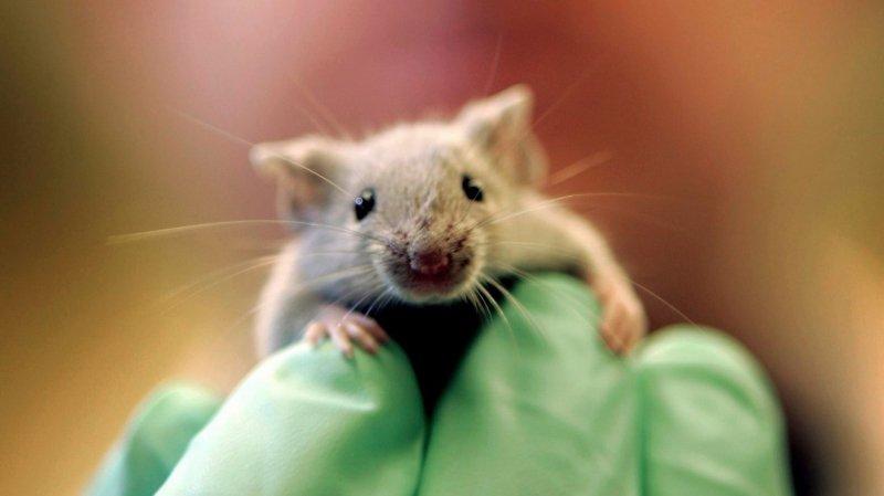 Des souris et des hommes