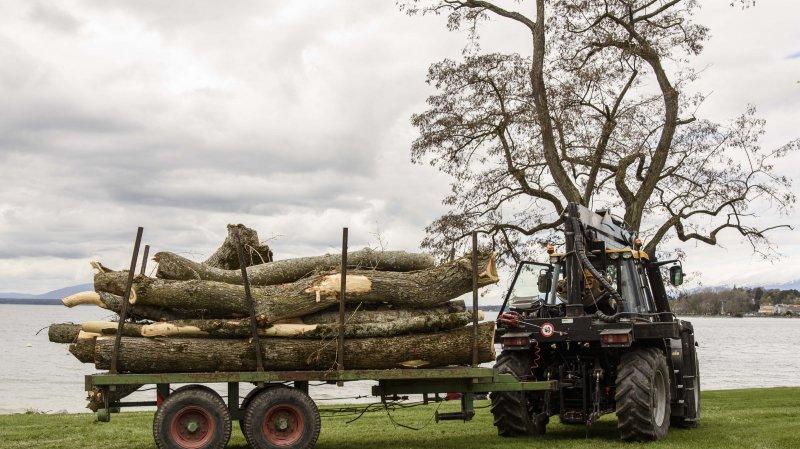 Pourquoi on devient vert lorsque les arbres sont abattus