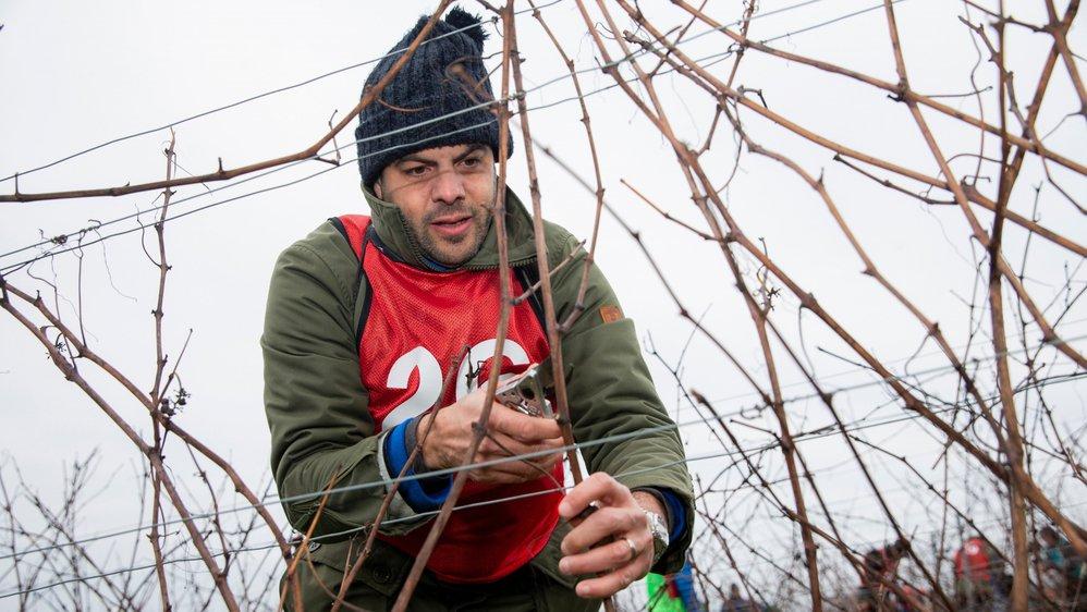 Parmi les 28 concurrents à ce premier concours national de taille viticole au Château d'Allaman, on retrouvait Thierry Ciampi, œnologue de la maison Schenk.
