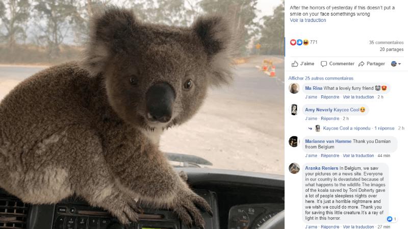 Le petit koala a trouvé refuge dans l'habitacle du camion.