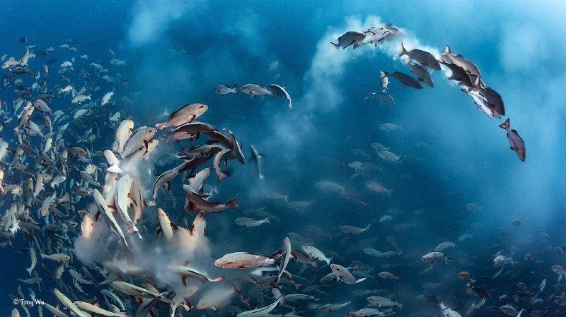 Qui dit réchauffement, dit prolifération d'algues qui sont de grosses consommatrices d'oxygène (illustration).