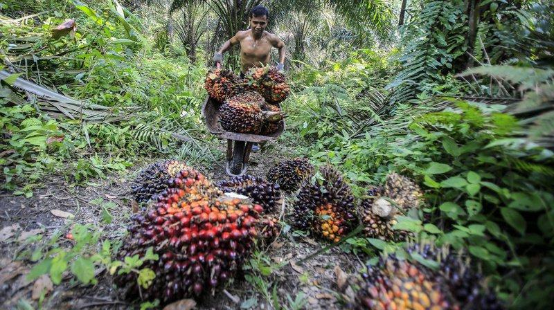 L'impact environnemental et social de la production d'huile de palme a été au centre des débats.