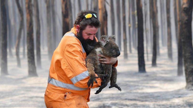 La faune australienne  à genoux