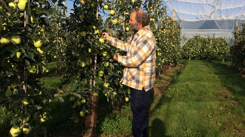 Grens: l'arboriculteur Luc Bidaux voit son jus de pomme sacré meilleur romand