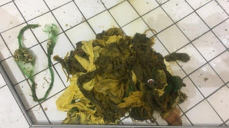 Grisons: six kilos de plastique dans l'estomac d'un cerf à Arosa