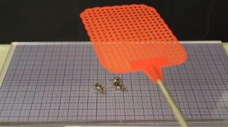 Un des modèles de DEANsect peut se faire écraser par une tapette à mouches puis continuer à se mouvoir.