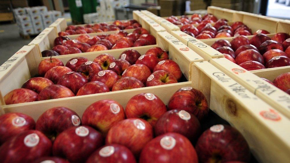 Les pommes se gardent plusieurs mois dans des frigos, comme ici à Léman Fruits à Perroy. Leur empreinte carbone est extrêmement faible.