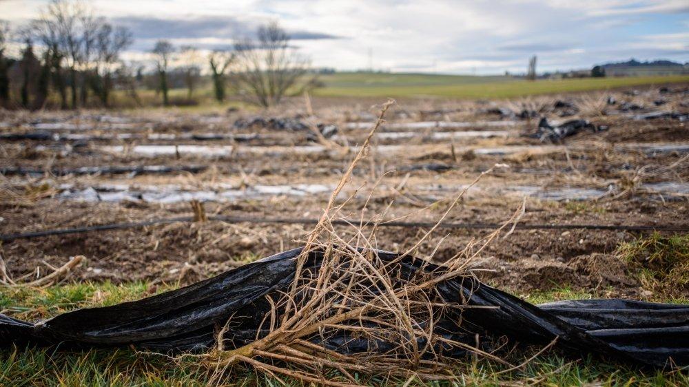 Le dernier ultimatum était fixé au 12 février. Les champs ne sont toujours pas débarrassés complètement du plastique.