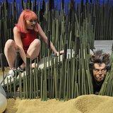 Le loup des sables