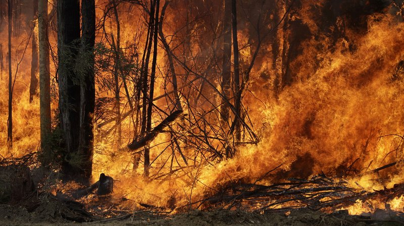 Incendies en Australie: le tourisme va perdre des milliards