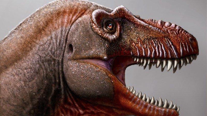 Paléontologie: un cousin du T-Rex découvert au Canada