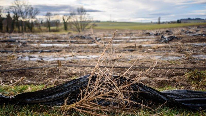 Champs pollués au plastique toujours pas totalement nettoyés