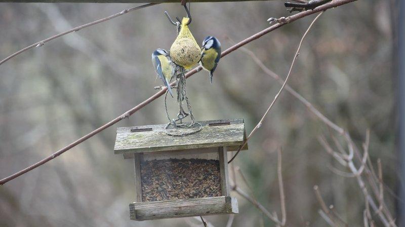 Six choses à savoir sur le nourrissage des oiseaux en hiver