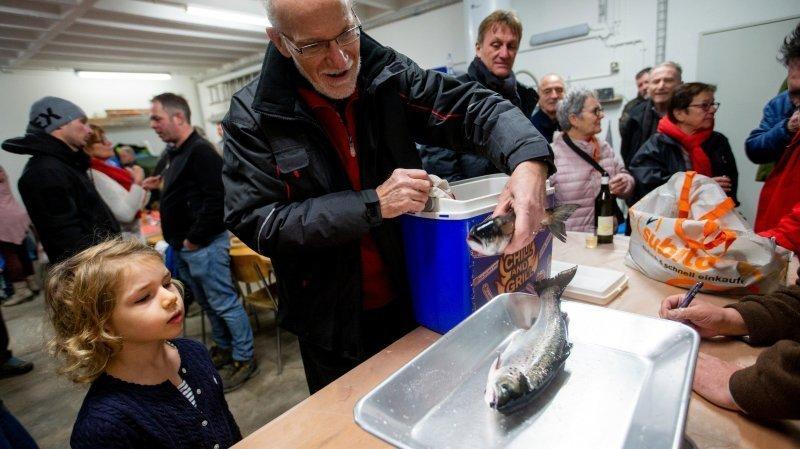 «Le poisson le plus populaire de Suisse est en train de disparaître»
