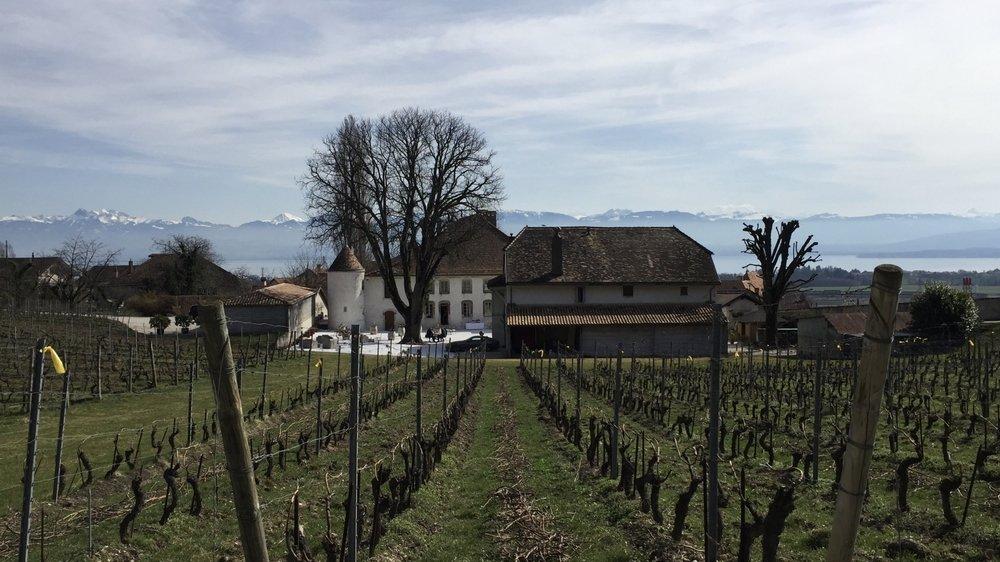 Neuf vignerons adeptes de la biodynamie expliqueront leur travail et feront déguster leurs crus ce samedi au Château Le Rosey, à Bursins.