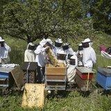 Au rucher: venez découvrir nos pollinisateurs