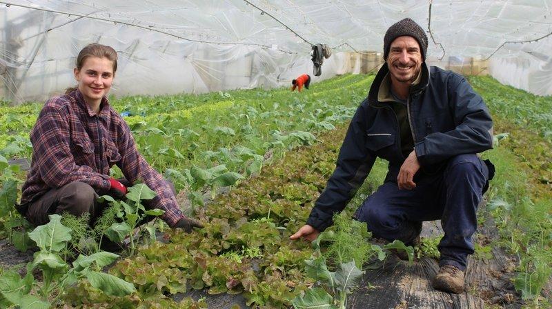 Ces coins de La Côte où trouver des salades toute l'année