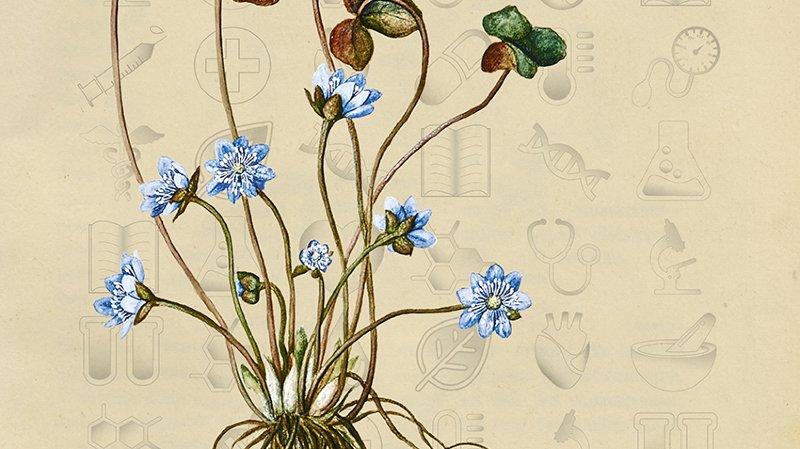 Plantes médicinales - Infusions des savoirs