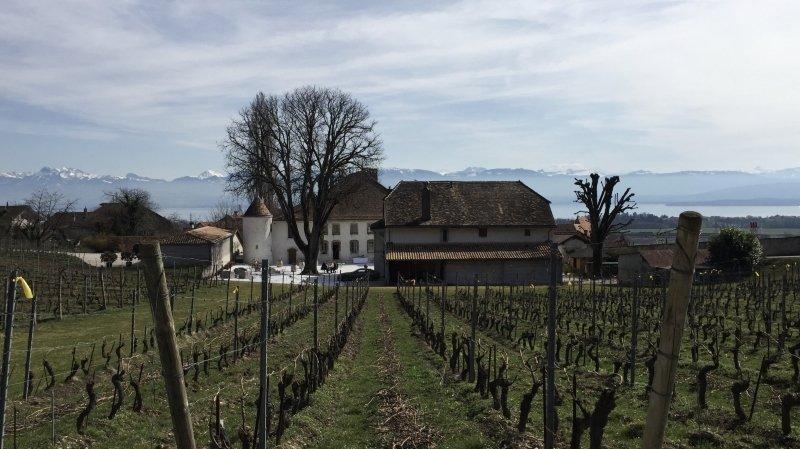 Château Le Rosey, temple des vignerons en biodynamie de La Côte