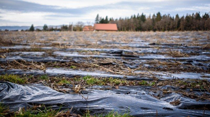 Champs pollués au plastique: les syndics veulent l'appui du canton