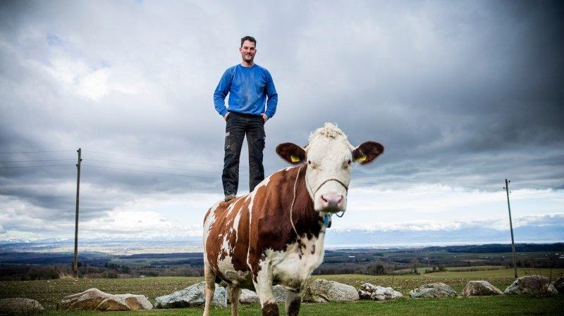 «Sucette», la vache de Mont-la-Ville qui se prend pour un cheval