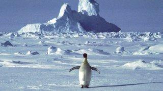 Antarctique: les restes d'un manchot de 43 millions d'années découverts