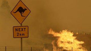 Incendies: les feux de forêts ont touché 75% des Australiens