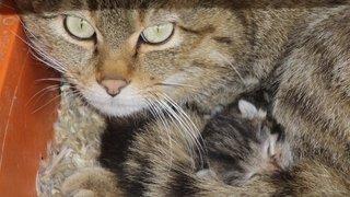 Des chatons forestiers sont nés à La Garenne