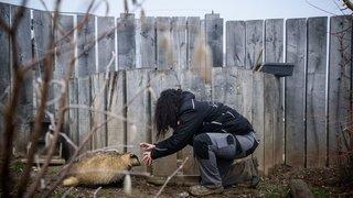 Le zoo de la Garenne a dû prendre des mesures drastiques