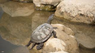A La Garenne, les tortues mettent le nez dehors après l'hiver