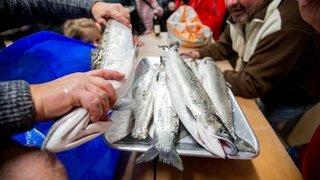 Les pêcheurs romands remettent des espèces méconnues au goût du jour