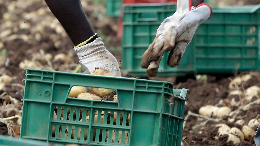 En temps normal, l'Italie compte 347 000 étrangers en situation régulière pour le travail des champs.