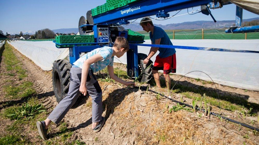 Les travaux d'avril, comme la récolte des asperges qui a commencé, nécessitent déjà un peu de main d'oeuvre. Mais dès mai, avec la cueillette des baies notamment, ce sont des milliers de bras qui seront requis.