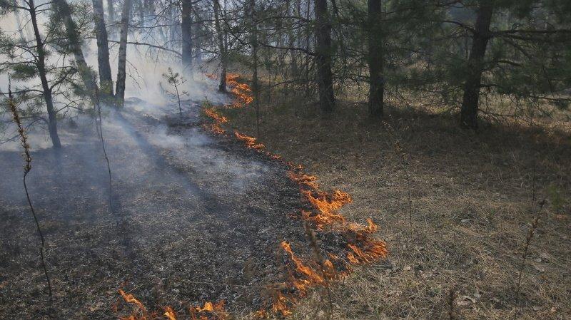 Ukraine: l'incendie qui ravage une forêt de Tchernobyl en passe d'être vaincu