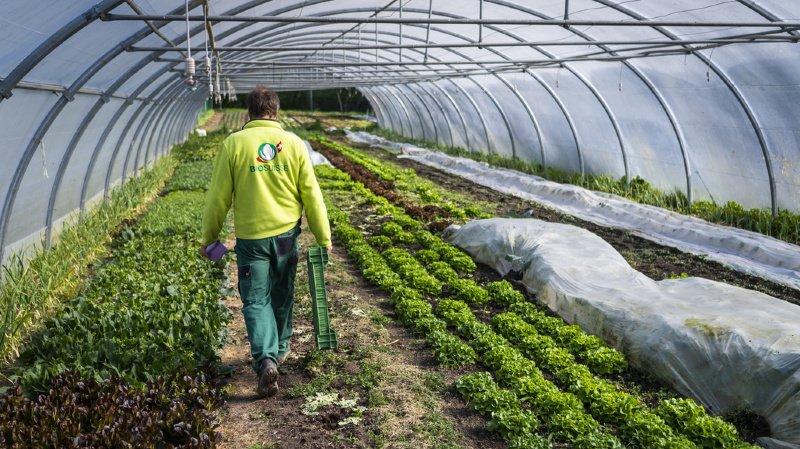 Agriculture: les exploitations bio gagnent des parts de marché