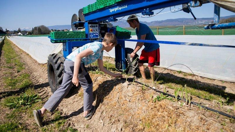 Sans ses saisonniers, l'agriculture redoute une pénurie de bras