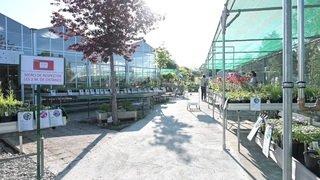 VIDEO - Les Garden Centre ont rouvert leurs portes