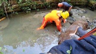 Versoix: un cheval a été sauvé hors d'un canal