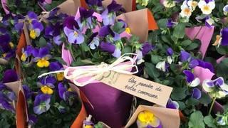 Lully-sur-Morges: un bouquet de pensées pour les aînés