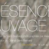 """Exposition """"Présence sauvage"""""""