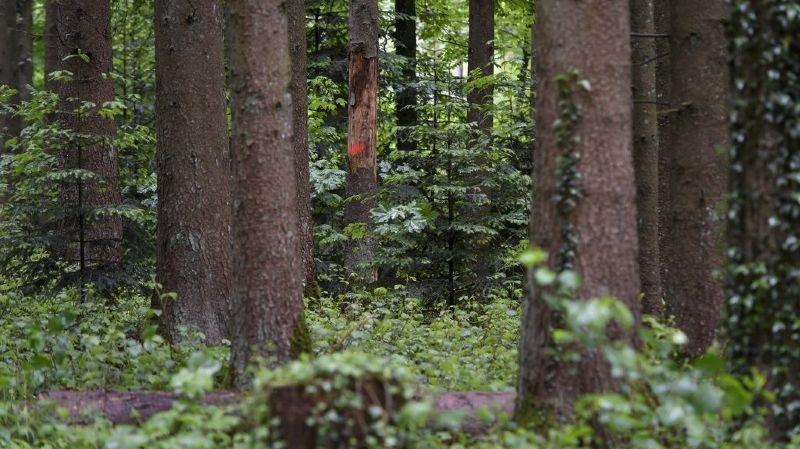 Environnement: les forêts suisses se portent mieux qu'il y a huit ans