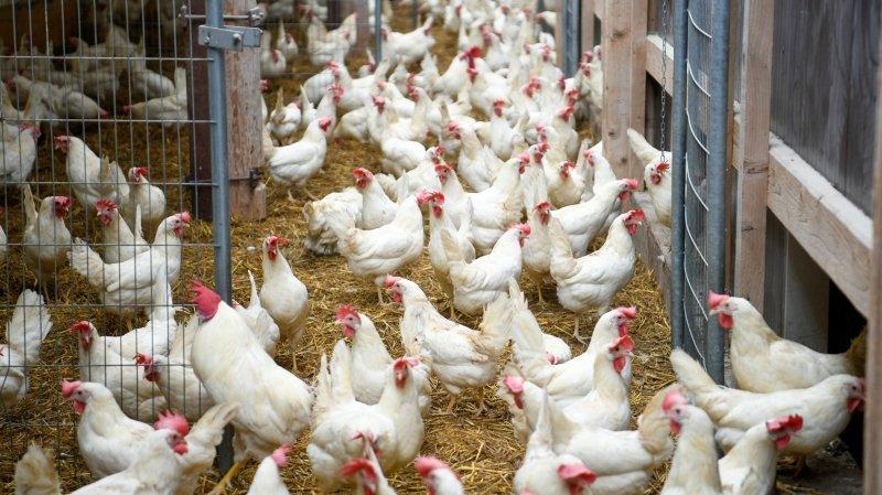 Aliments: le Conseil fédéral accepte une harmonisation de l'étiquetage