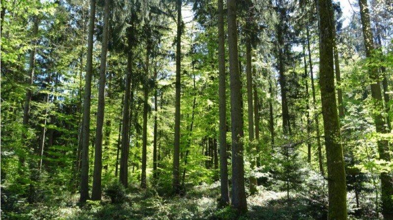 """Le projet de parc naturel du Jorat entame une nouvelle étape en vue de sa labellisation au titre de """"Parc d'importance nationale""""."""