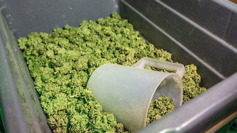Cannabis: 33 millions de francs pour des producteurs de fleurs de chanvre