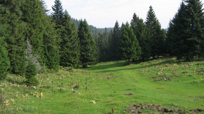 Randonnée au Crêt de la Neuve depuius la Dunanche