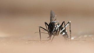 Nyon aux avant-postes dans la bataille contre le moustique tigre