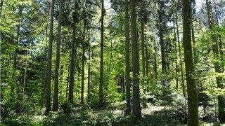 Lausanne: nouvelle étape clé pour le parc naturel du Jorat
