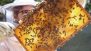 Environnement: environ une colonie d'abeilles sur huit n'a pas survécu à l'hiver